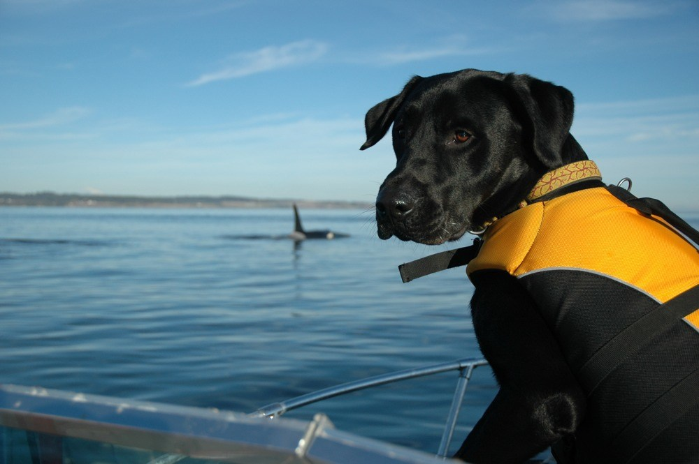 Tucker – Conservation Canine